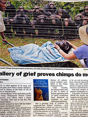 News_chimp
